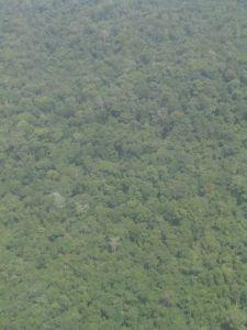 La grande forêt